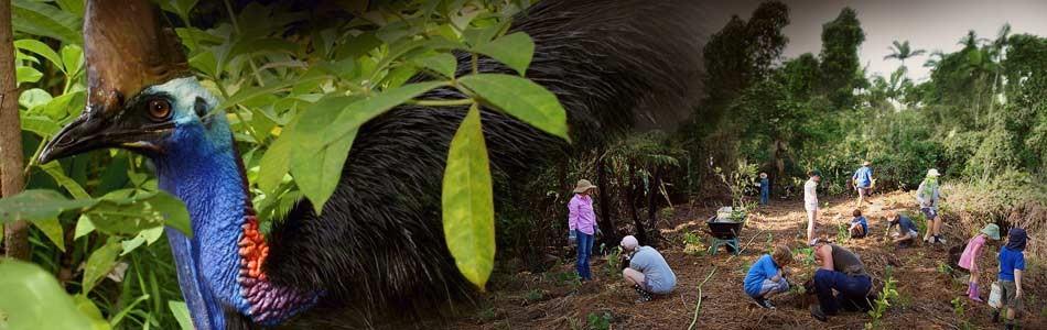 Biodiversity Wet Tropics NRM