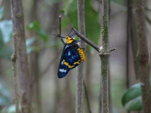 Butterfly resting on a tropical rainforest branch