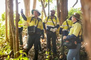 Crazy Ant Taskforce - Rainforest Aboriginal People