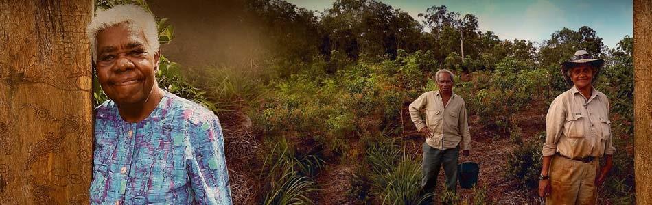 Wet Tropics Aboriginal Culture