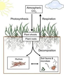 Soil decomposition cycle
