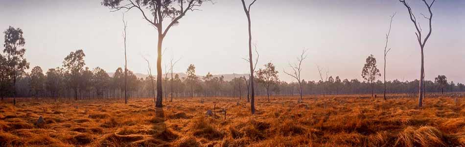 Northern Tablelands savannah country